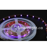 SMD5050 30LED/M RGB LED Strip Light